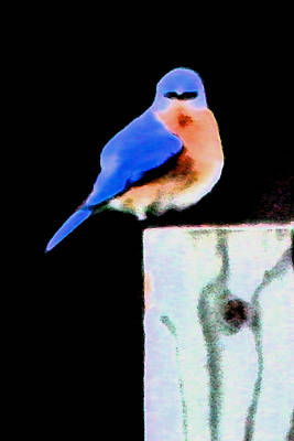 Another Angry Bluebird Art Print by Alan Skonieczny