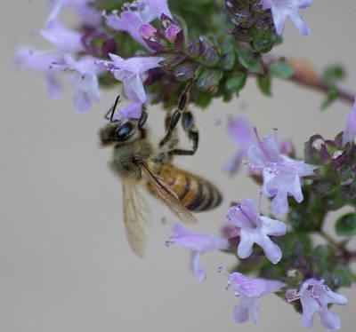 Photograph - Sweet Honeybee Version 2 by Marilyn Wilson