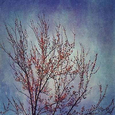 Texture Wall Art - Photograph - Another Blooming Tree #tree by Joan McCool