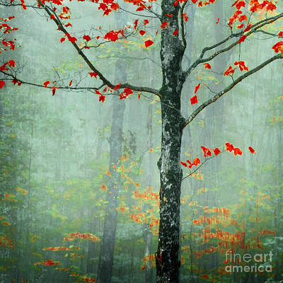 Red Leaf Photograph - Another Day Another Fairytale by Katya Horner