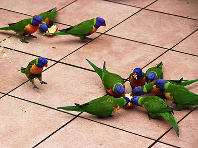 Photograph - Another Lorikeets Is Landing by Miroslava Jurcik