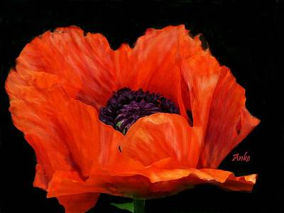 Another Red Poppy Art Print by Anke Wheeler