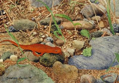 Newts Painting - Another Salamander by Sharon Farber