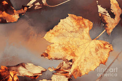 Photograph - Another Season To Pass by Janie Johnson