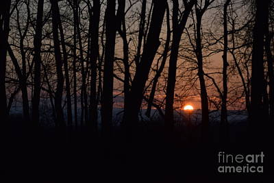 Photograph - Another Sunrise In The Woods by Mark McReynolds