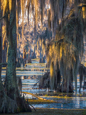 Photograph - Swamp Curtains In February 2 by Kimo Fernandez