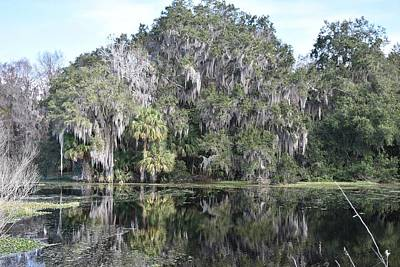 Photograph - Another View Of Alachua Sink by rd Erickson