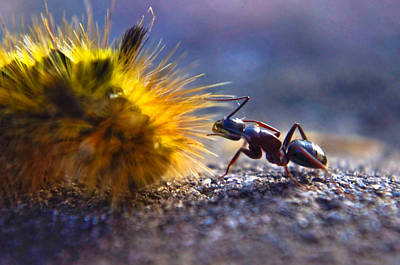 Photograph - Ant Encounter by Adria Trail