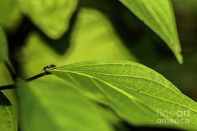 Photograph - Ant Life by JT Lewis