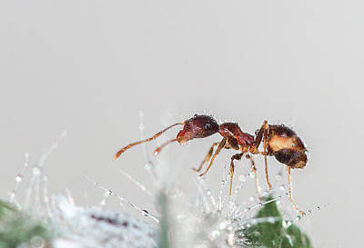 Impressionist Landscapes - Ant Macro Photography by Ronel BRODERICK
