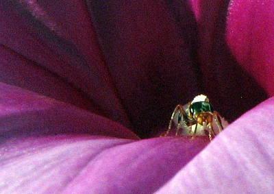 Photograph - Ant On Lavendar Flower by T Guy Spencer
