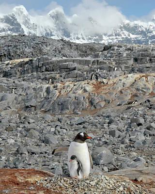 Photograph - Antarctic Morning by Alan Toepfer