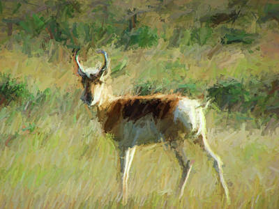 Digital Art - Antelope Alone by Cathy Anderson
