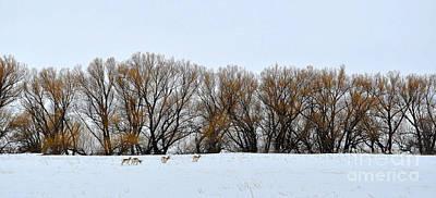 Photograph - Antelope Grazing by Anjanette Douglas