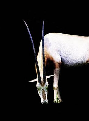 Antelope Art Print by Martin Newman