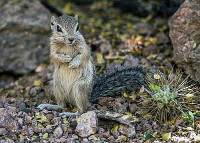 Photograph - Antelope Sqirrel 6632-041818-1cr by Tam Ryan