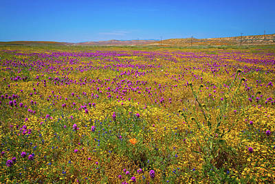 Photograph - Antelope Valley Superbloom 2017 by Lynn Bauer