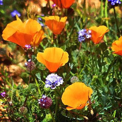Photograph - Antelope Valley Wildflowers by Timothy Bulone