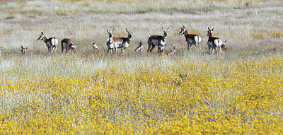 Photograph - Antelopes 7541-092714-2cr by Tam Ryan