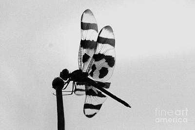 Photograph - Antena Ornament by Kim Henderson