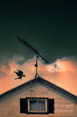 Photograph - Antenna On Old House With Raven by Jill Battaglia
