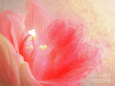 Anther Rose Pink Floral Art Art Print by Mona Stut