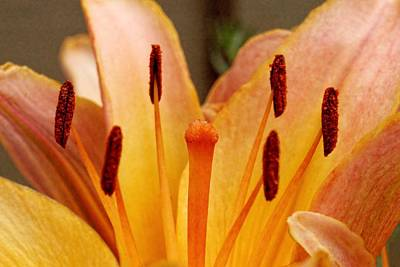 Photograph - Anthers by KJ Swan