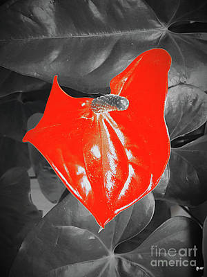 Photograph - Anthurium Flamingo Flower by Daniel Janda