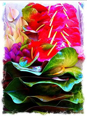 Anthurium  Art Print