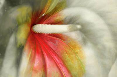 Epiphyte Digital Art - Anthurium No.7 by John Van Maris