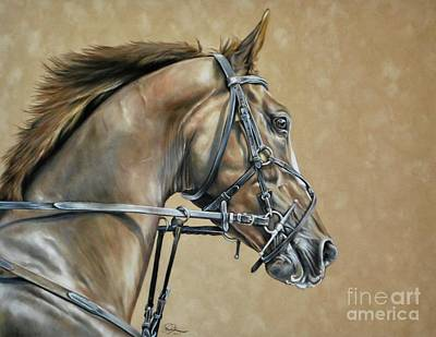 Bay Horse Drawing - Anticipation by Danielle Rosalie Pellicci