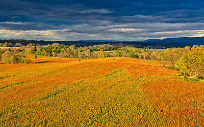 Photograph - Antietam Cornfields by John M Bailey