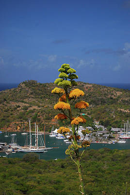 Photograph - Antigua National Flower  by Gary Wonning
