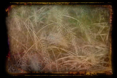 Photograph - Antique Amber Golden Wheat by Aimee L Maher ALM GALLERY