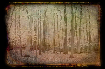 Photograph - Antique Amber Golden Woods by Aimee L Maher ALM GALLERY