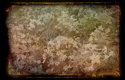 Photograph - Antique Amber Mixed Flower Garden by Aimee L Maher ALM GALLERY