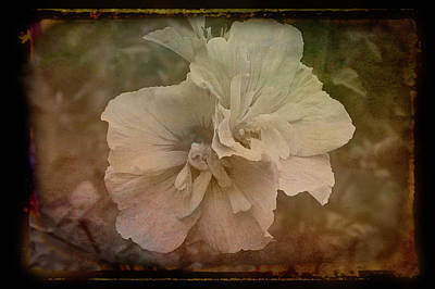 Photograph - Antique Amber Summer Blossom by Aimee L Maher ALM GALLERY