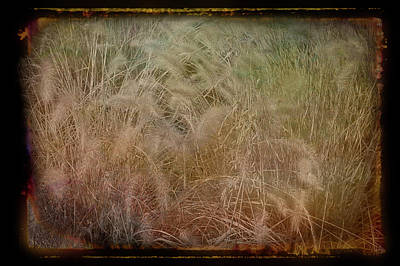 Photograph - Antique Amber Summer Wheat by Aimee L Maher ALM GALLERY