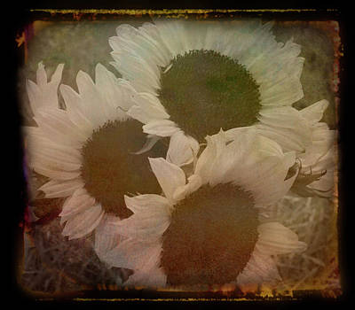 Photograph - Antique Amber Sunflower Bouquet by Aimee L Maher ALM GALLERY