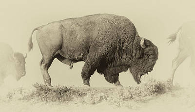 Bison Photograph - Antique Bison by Shane Linke