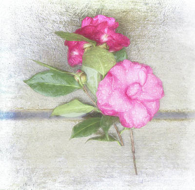Antique Camellias Square Art Print