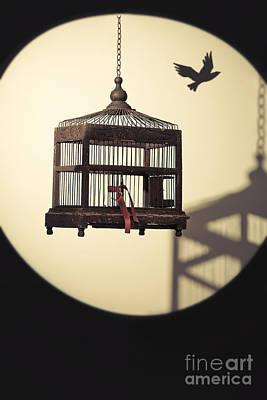 Birdcage Photograph - Antique Edwardian Birdcage by Amanda Elwell