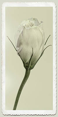 Photograph - Antique Floral Showcard by Garry McMichael