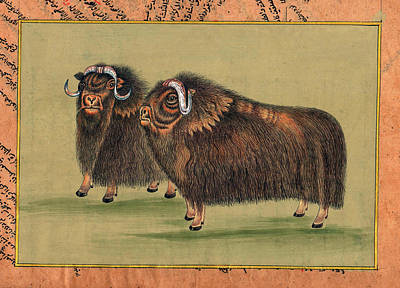 Antique-painting-artwork-artist-gallery-animal-himalayan-thar Painting. Art Print