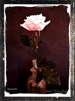 Photograph - Antique Pink Rose by Marsha Heiken