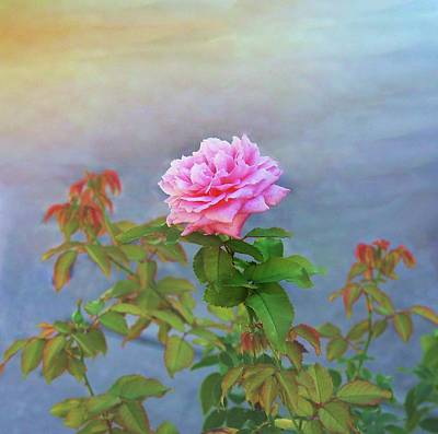 Photograph - Antique Rose by Ellen Barron O'Reilly