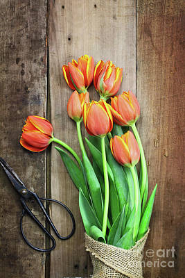 Photograph - Antique Scissors And Bouguet Of Tulips by Stephanie Frey