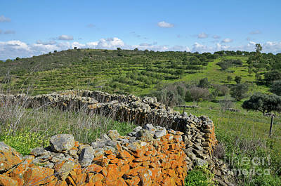 Antique Stone Wall Of An Old Farm Art Print by Angelo DeVal