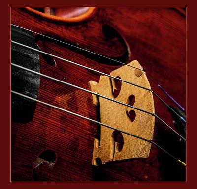Photograph -  Antique Violin 1732.20 by M K Miller