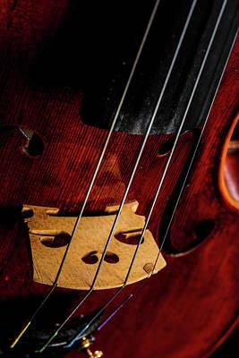 Photograph -  Antique Violin 1732.21 by M K Miller